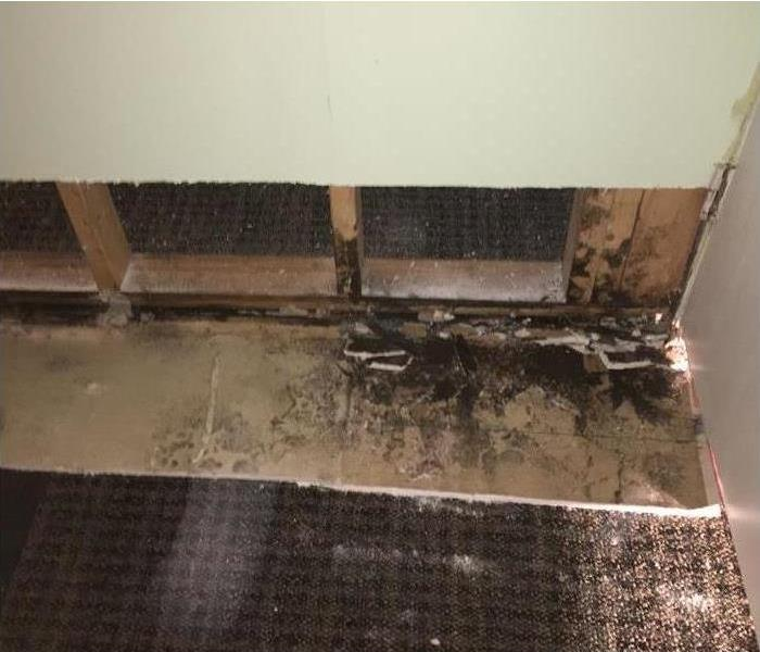 Black mold has been discovered behind drywall