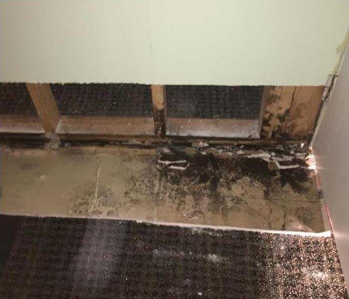 Why SERVPRO Keep Your Facilities Mold-Free