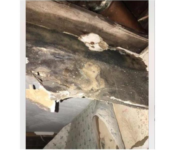 Mold Remediation Got Mold? How Did This Happen?